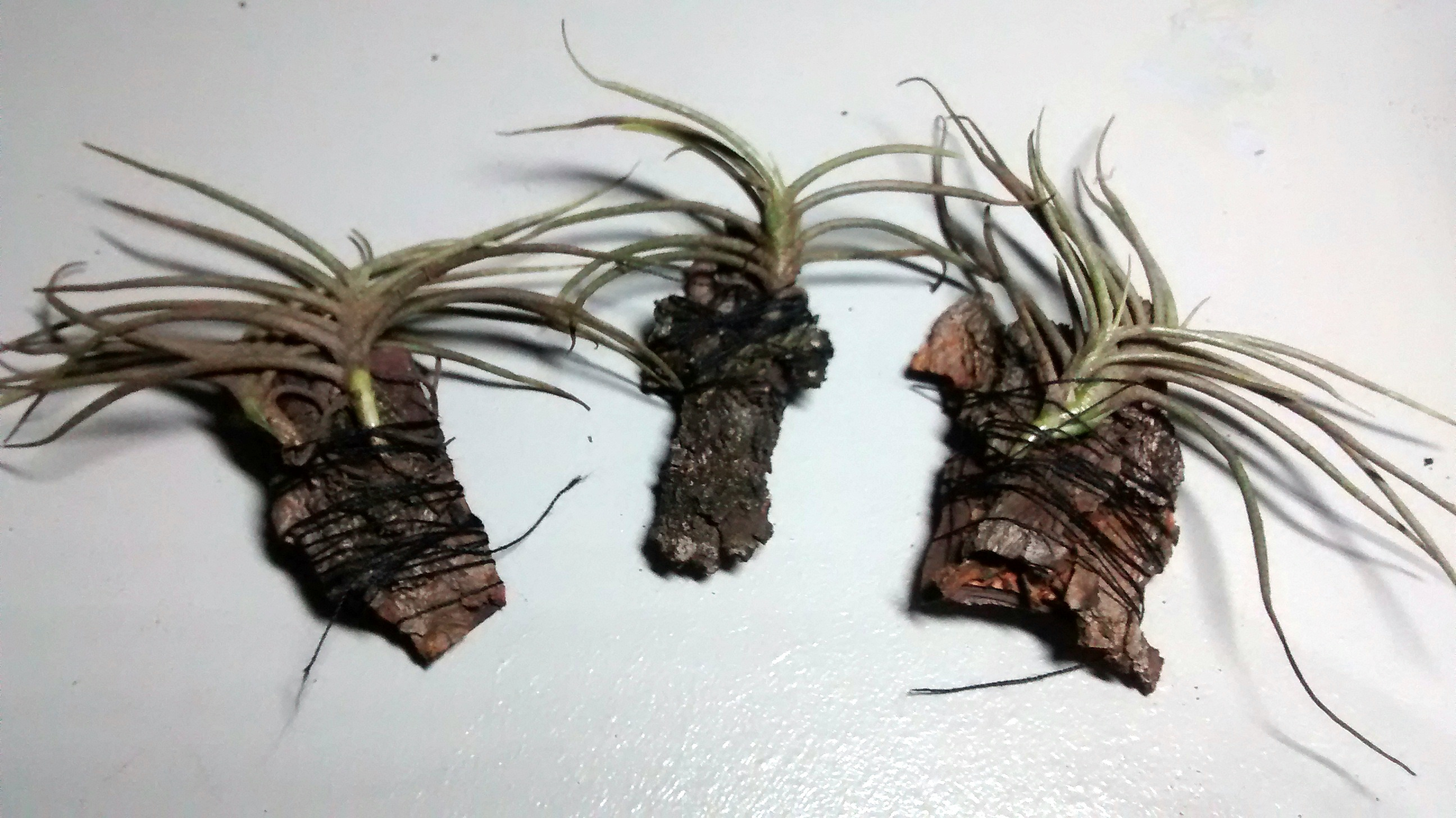 Picture of Second Type Plant Pot  - Bromeliad