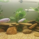 So, you've bought a secondhand fish tank