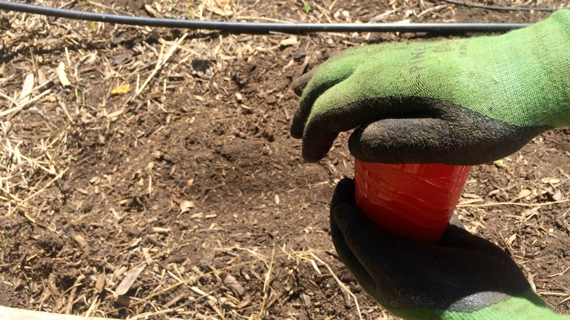 Creative Way to Plant Carrots Using Coffee Grounds: 7 Steps