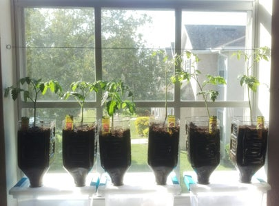 Plant Some Tomatoes Already!