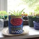 How to make an indoor garden