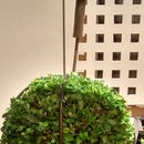 Topiary Shaping Frame