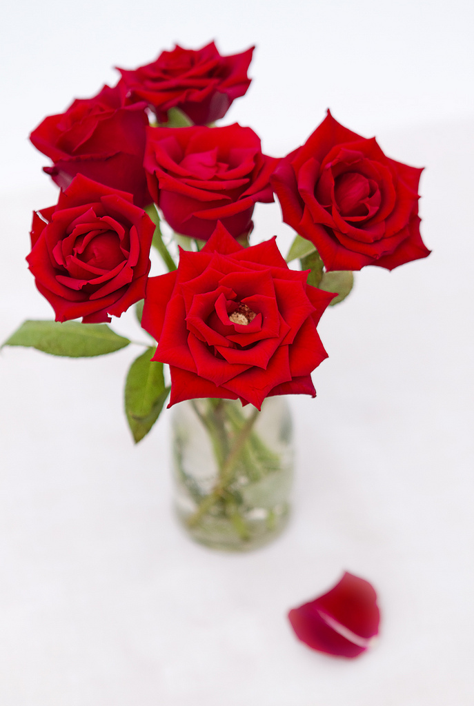 Picture of How to Plant Beautiful Roses
