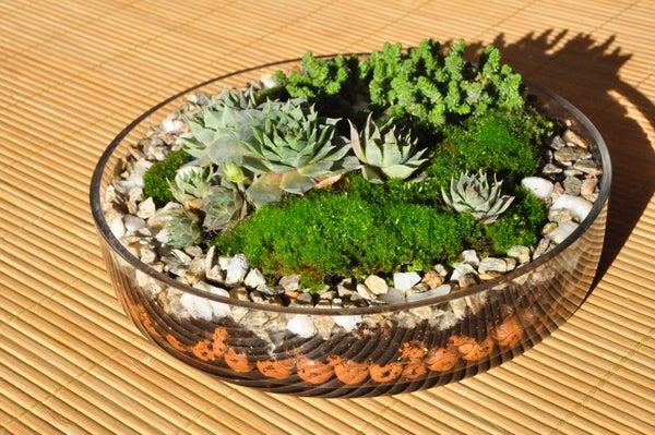 Plant Terrarium Basics.