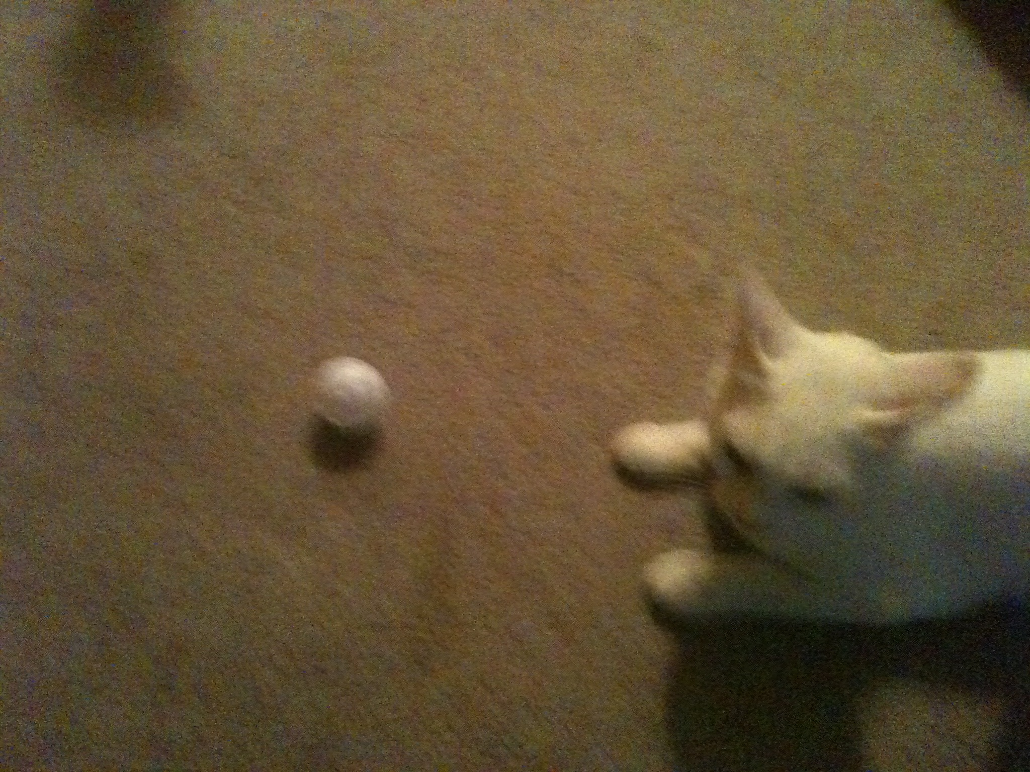 Picture of Homemade Cat Toy