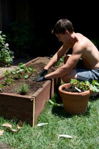 Plant Veggies!