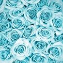 rosewaterr