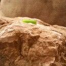 Under a Rock Geocache