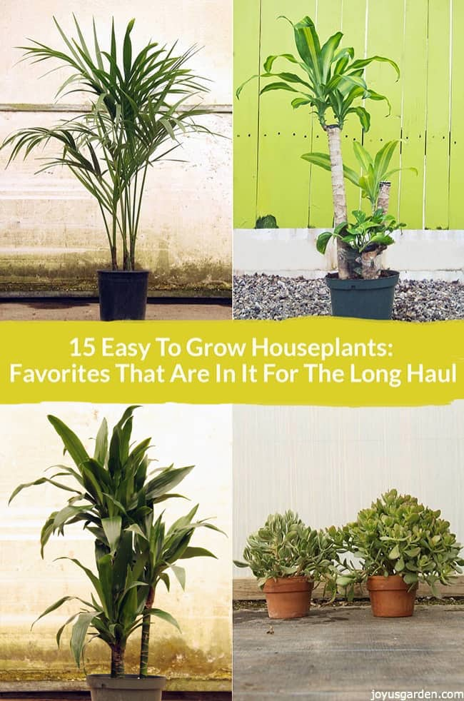 Picture of 15 Easy to Grow Houseplants: Favorites That Are in It for the Long Haul