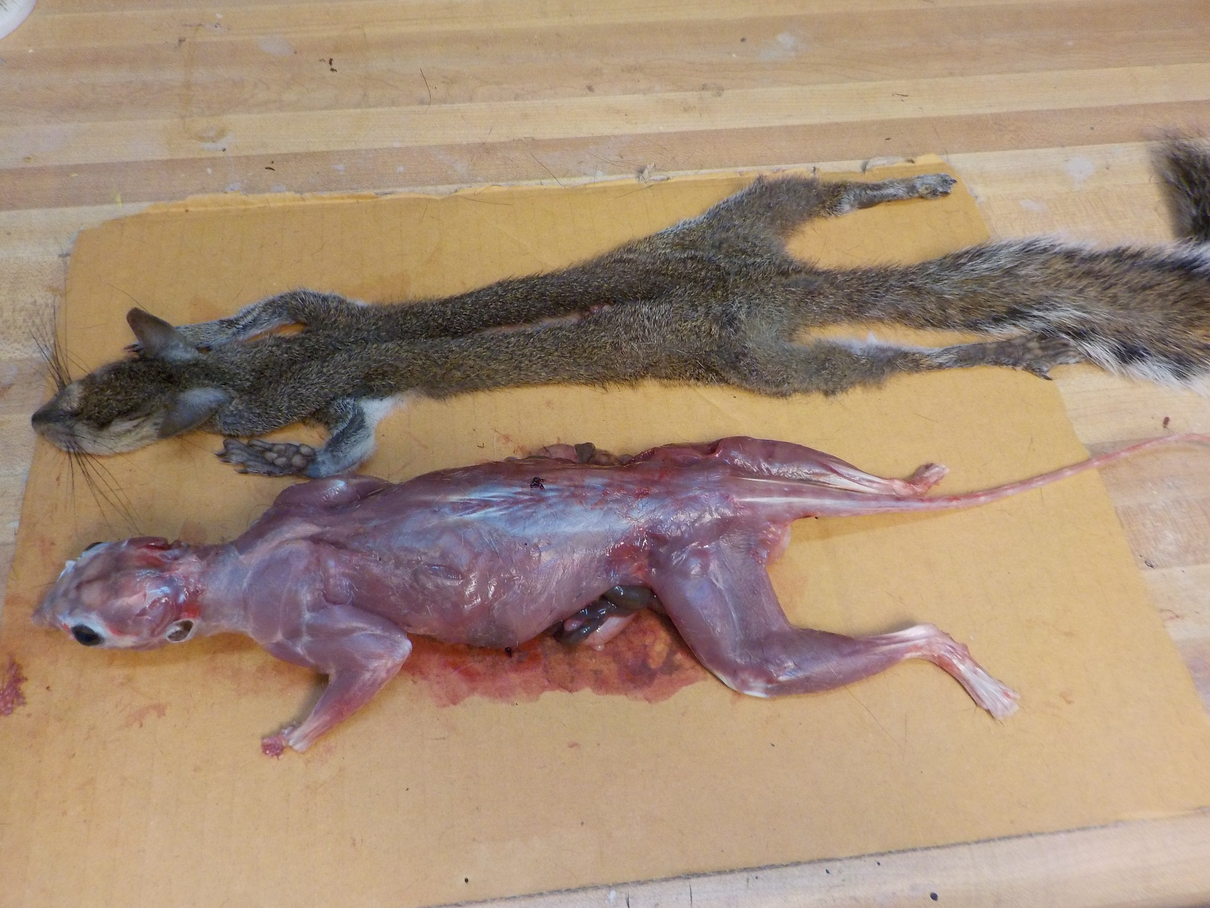 Picture of Skinning the Head - Eyes and Mouth