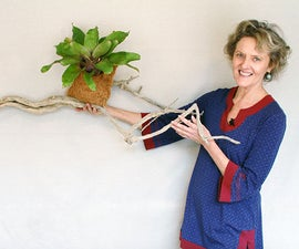 An Easy Way to Grow Bromeliads on Driftwood or a Branch
