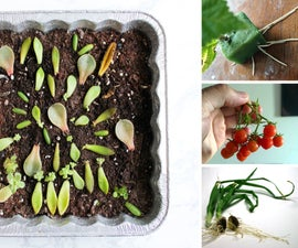 10+ Ways to Grow Plants From a Cutting