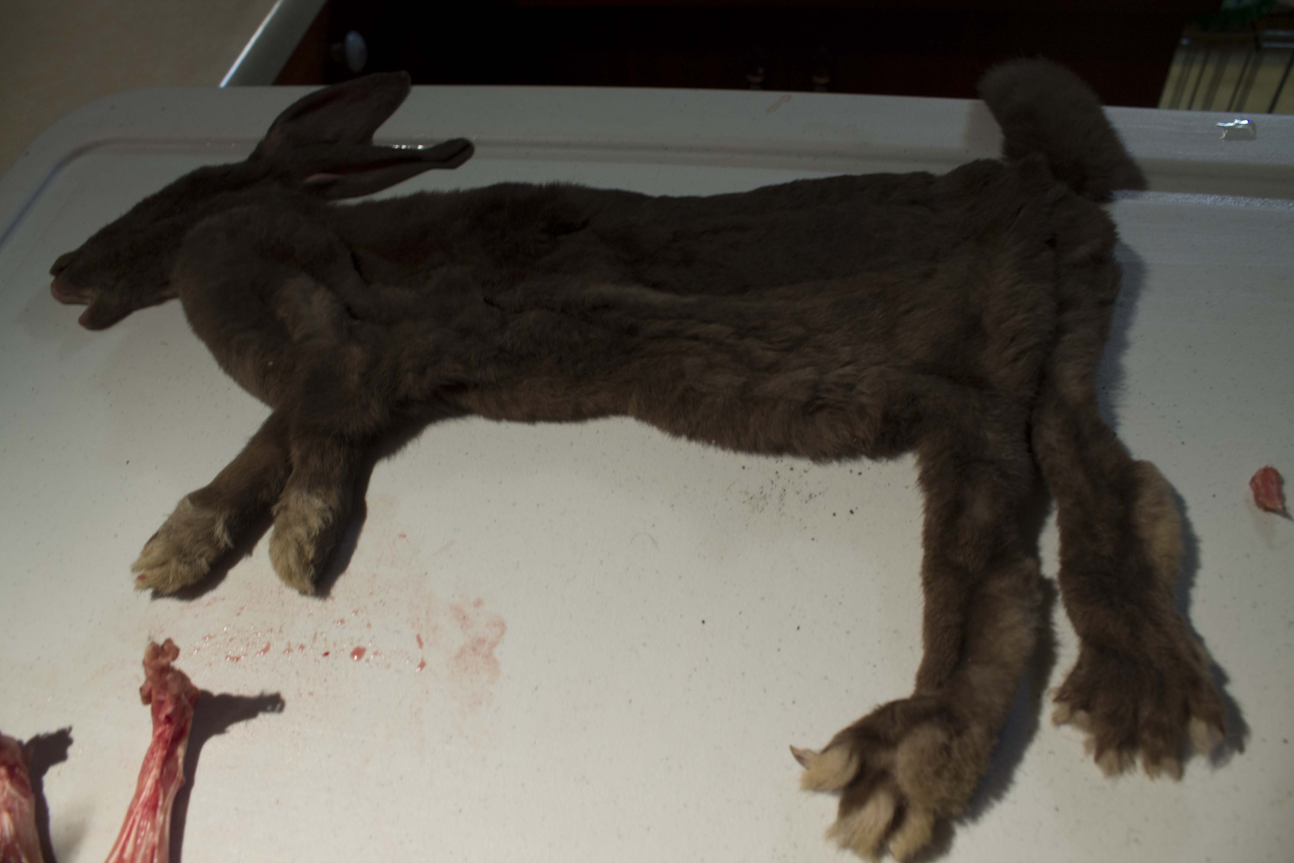 Picture of Step # 7- the Taxidermy Aspect