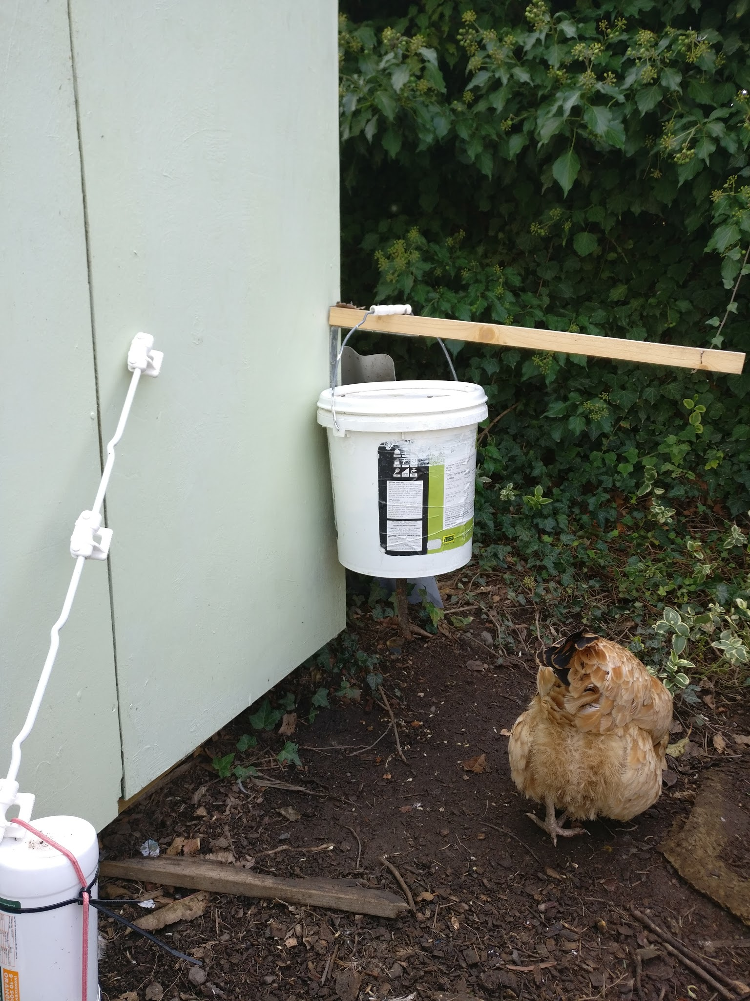 Picture of Rodent Proof Self-dispensing Chicken Feeder