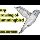 How to Draw Hummingbird