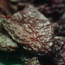 British bred chipotles (smoked dried chillies)