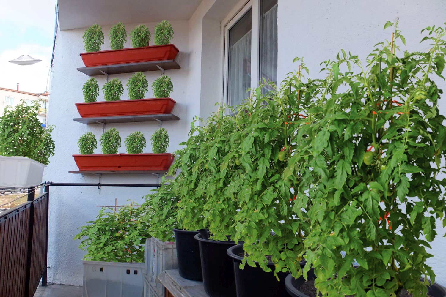 Picture of Starting a Balcony Garden