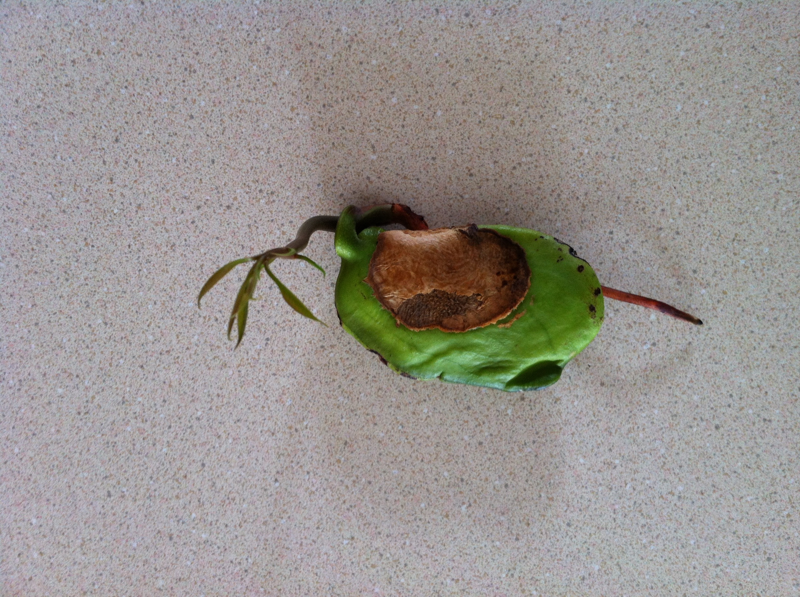 Picture of Plant the Seedling