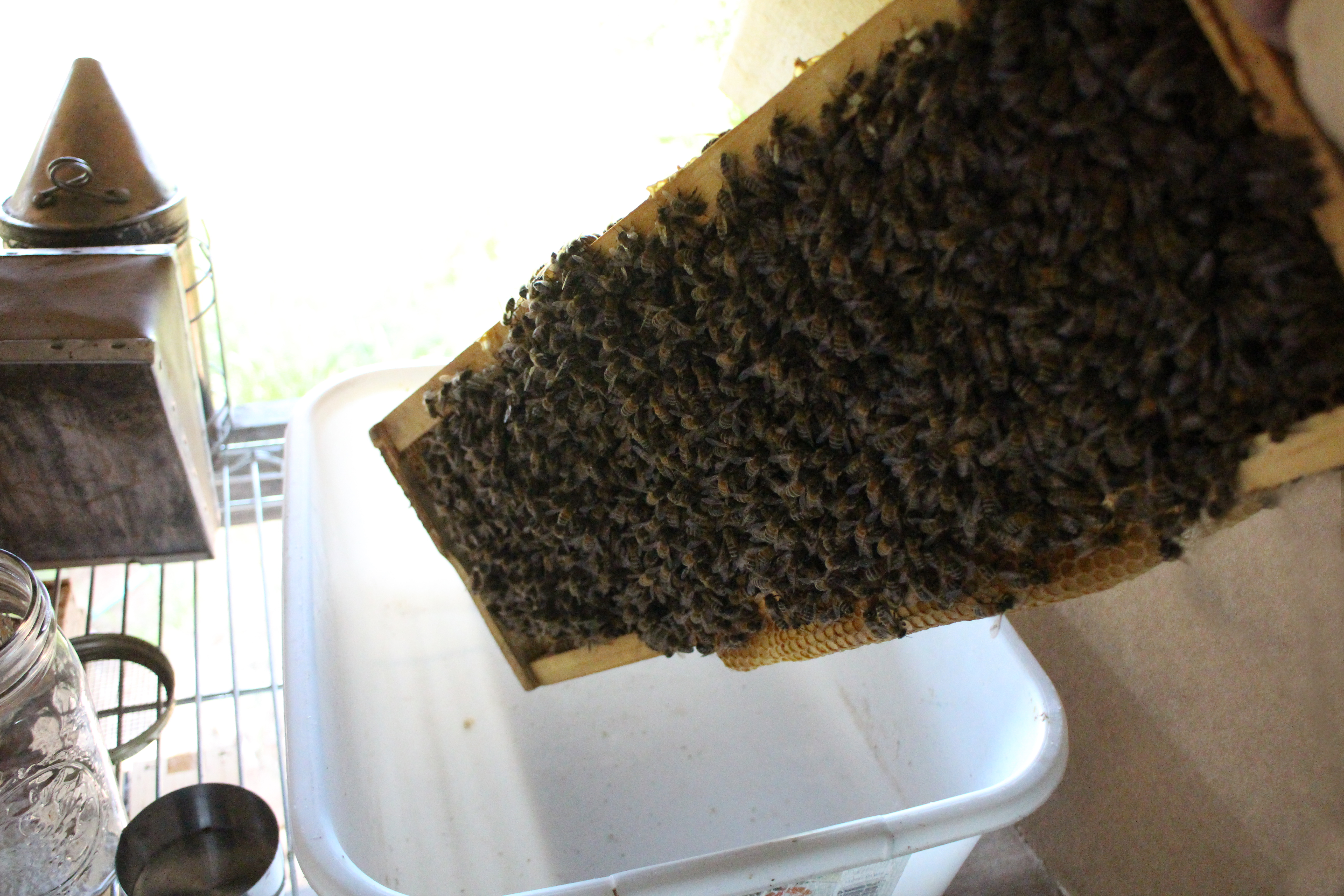 Picture of Shake Your Bees Off a Brood Frame