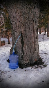 1. Make or Buy Some Maple Syrup