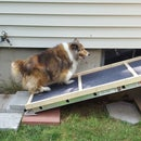 Mighty Light Pet Accessibility Ramp