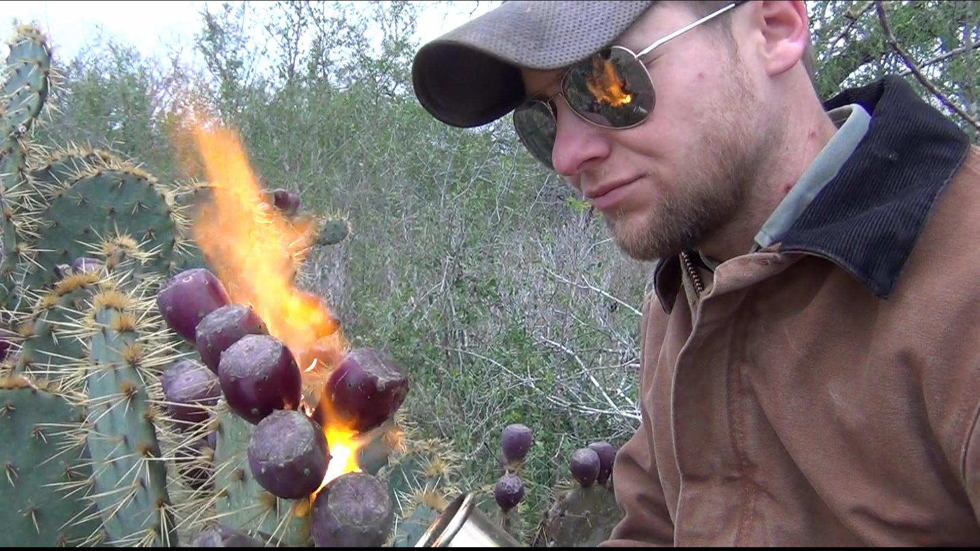Picture of How to Pick and Eat Prickly Pear Cactus