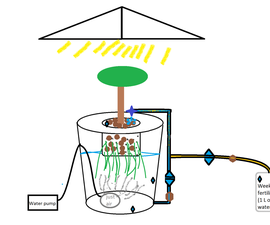 Automated DWC Hydroponic System