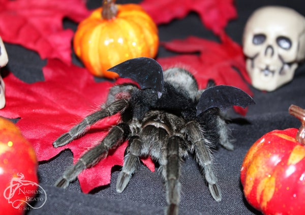 Tarantula Bat Halloween Costume