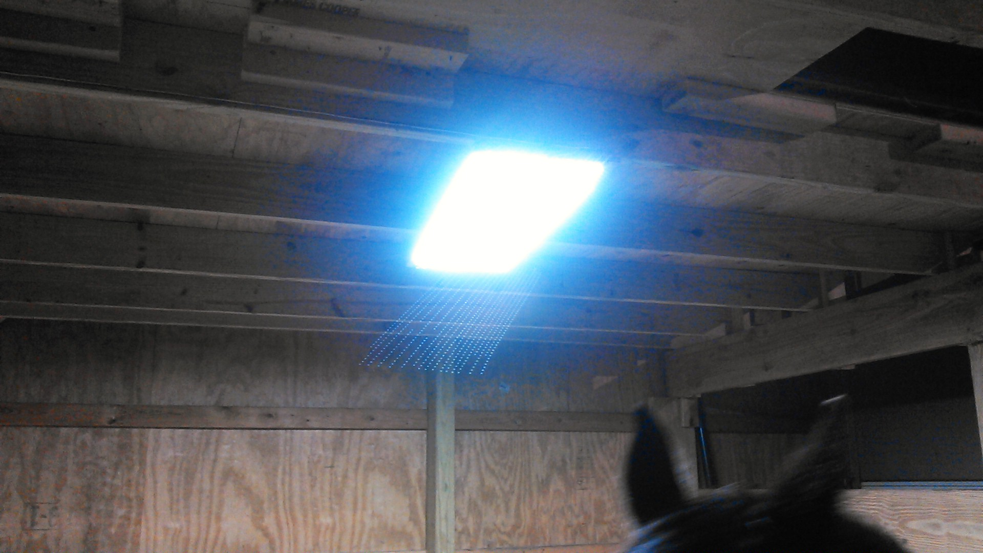 Picture of LED Horse Stall Light