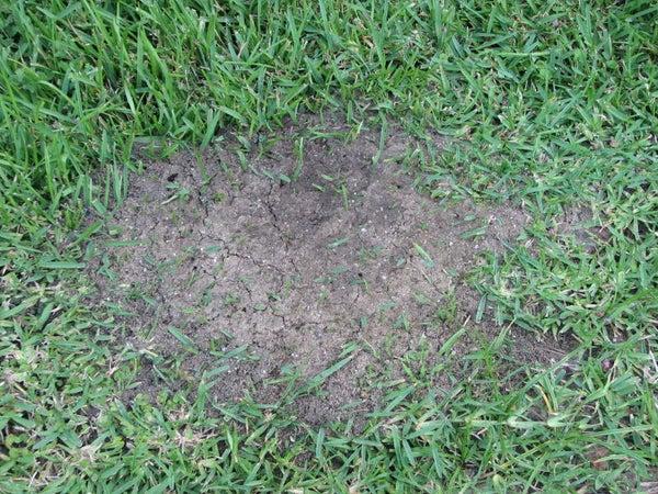 How to Kill Ants (Not Aunts!) the Organic Way