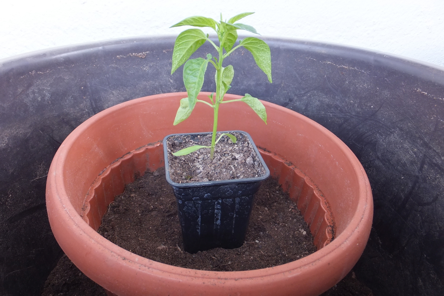 Picture of Harden and Move Your Seedlings Out
