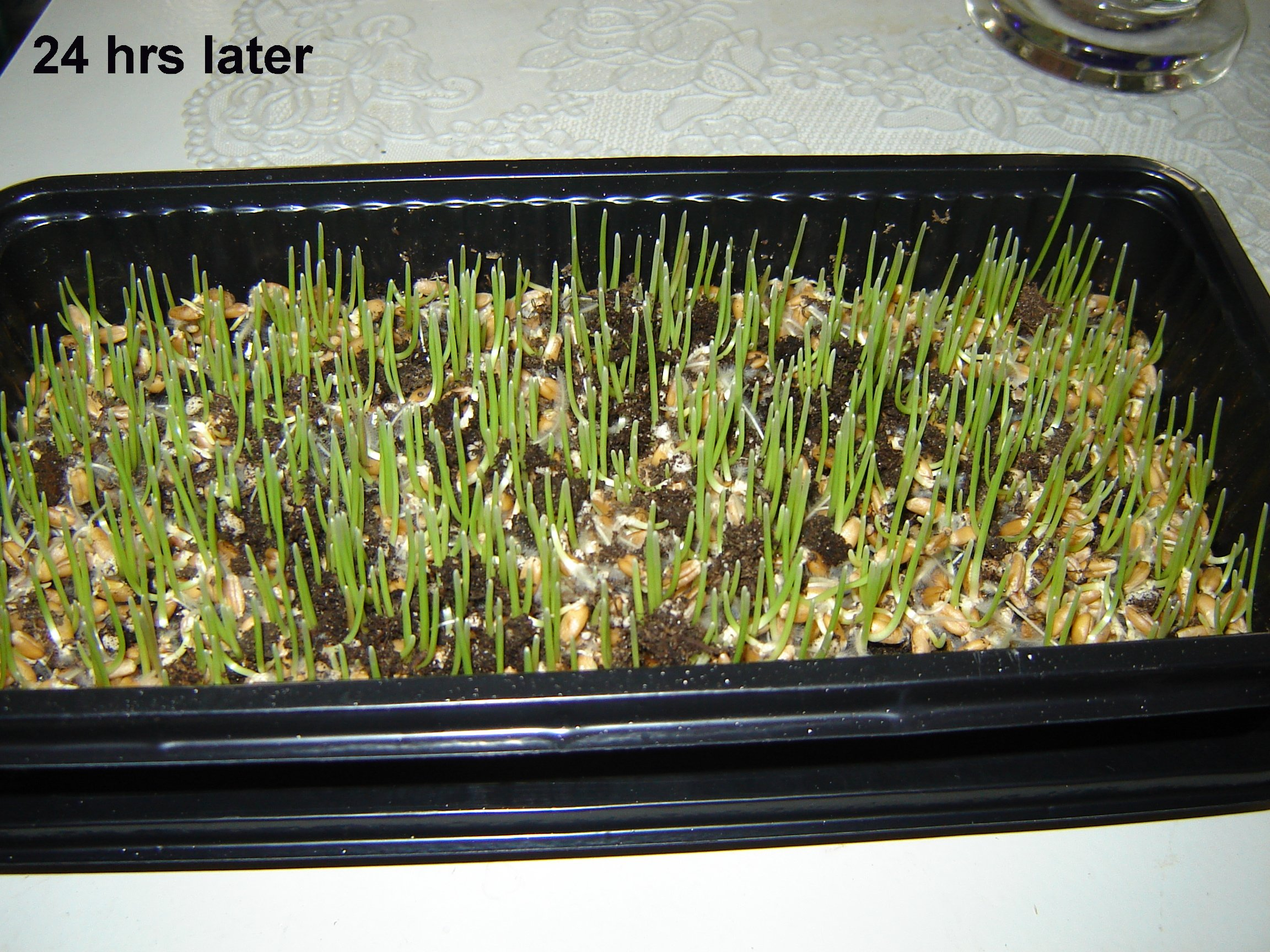 Picture of Step 5:  Its Growing