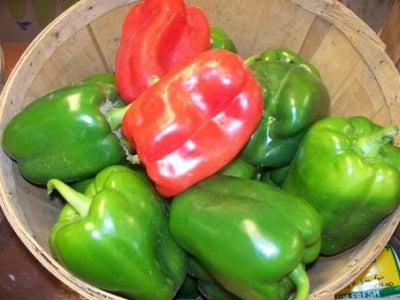 Peppers,watering,feeding,planting,growing Climates,soil