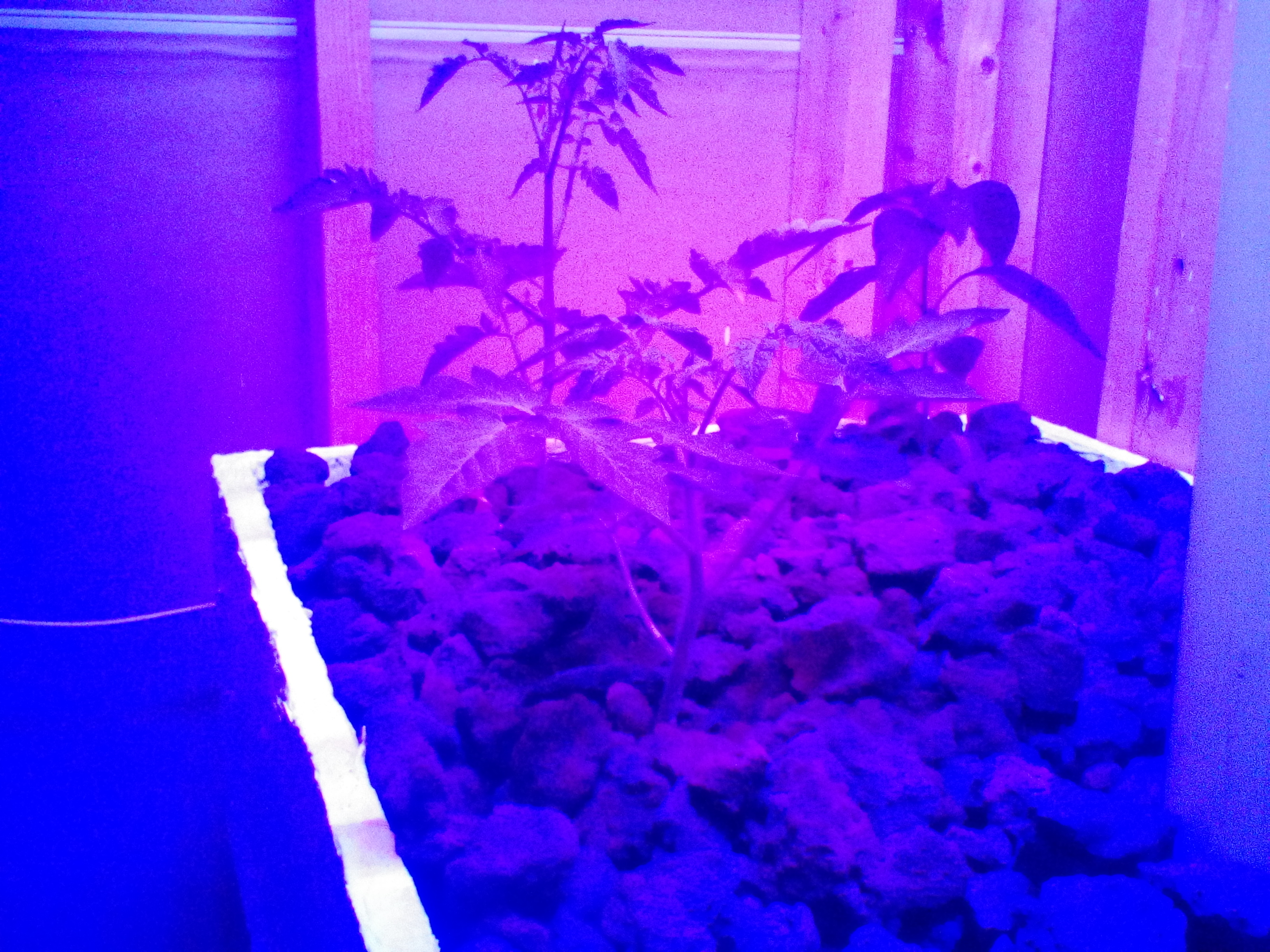 Picture of Grow Lights