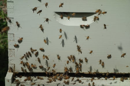 If You See a Swarm...