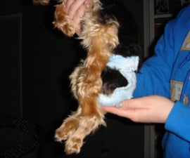 Doggy Diapers
