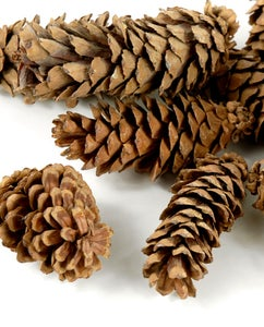 Gather Your Pine Cones and Materials