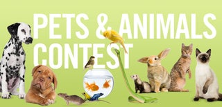 Animals Contest