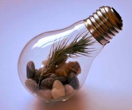 How To Make A Light Bulb Terrarium