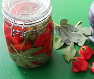 Pickled Bell Chilies