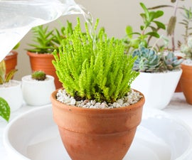 How and When to Water Your Houseplants