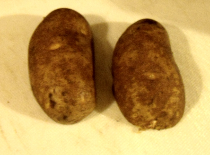Picture of The Potato and Onion