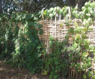 Weave a Bamboo Privacy Fence
