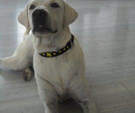 Easy raised paint dog collar !