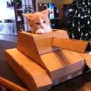 How to build a Tank with a Cardboard Box
