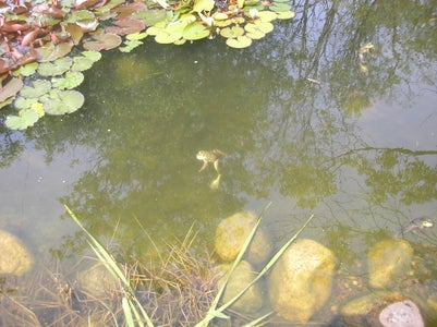 Experiment 1: Keep One Pond Resident Alive for a Year
