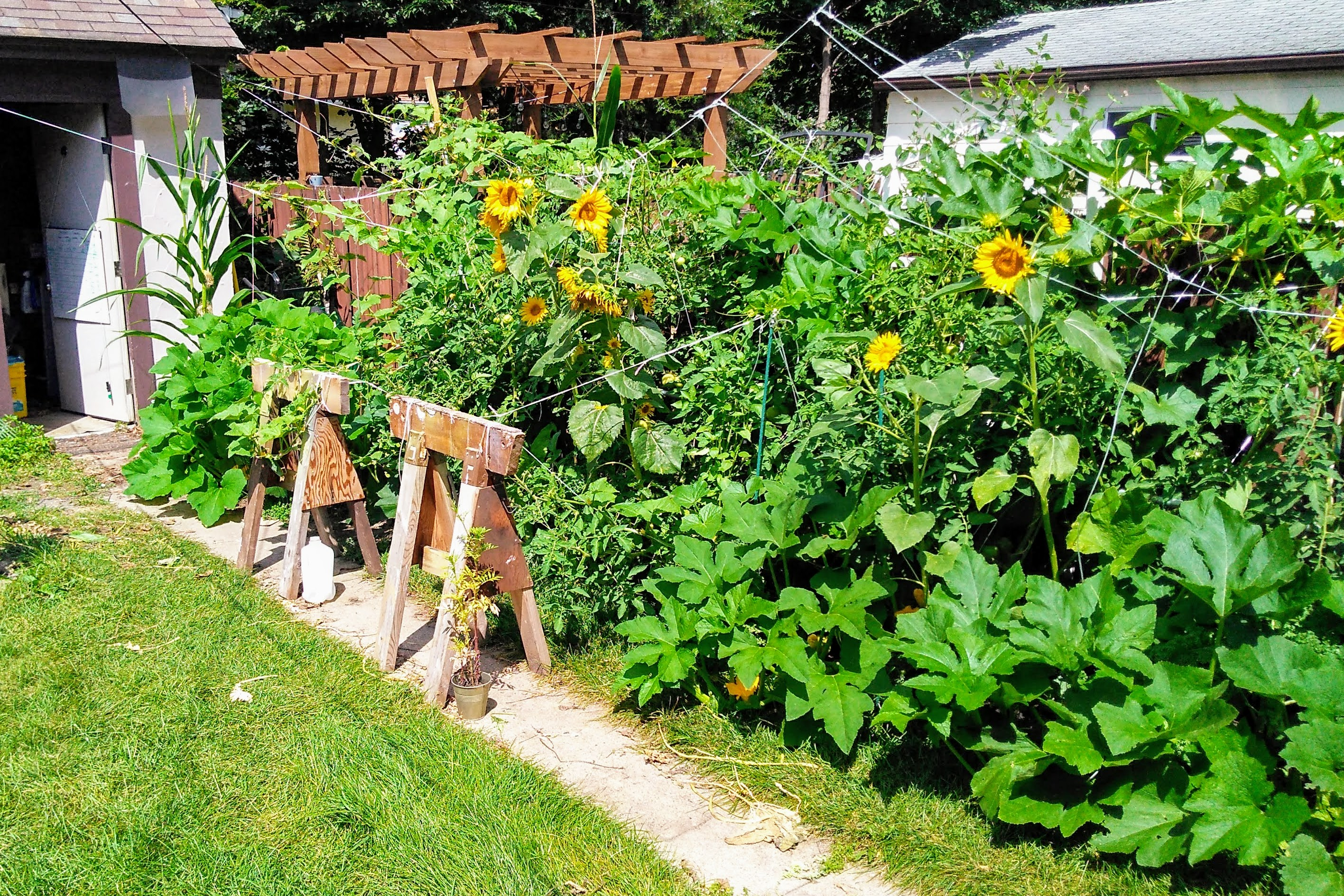 Picture of How to Manage a Garden on Vacation