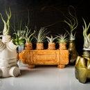 PET Bottle Planters