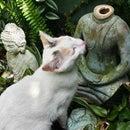 How to fix a broken garden buddha