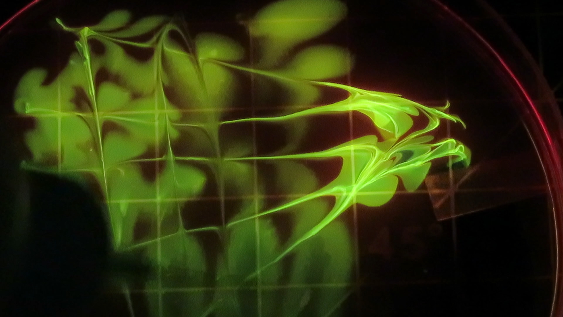 Picture of Paint Glow-y Wonders